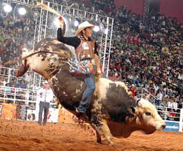 rodeio-extrema-2012-touro